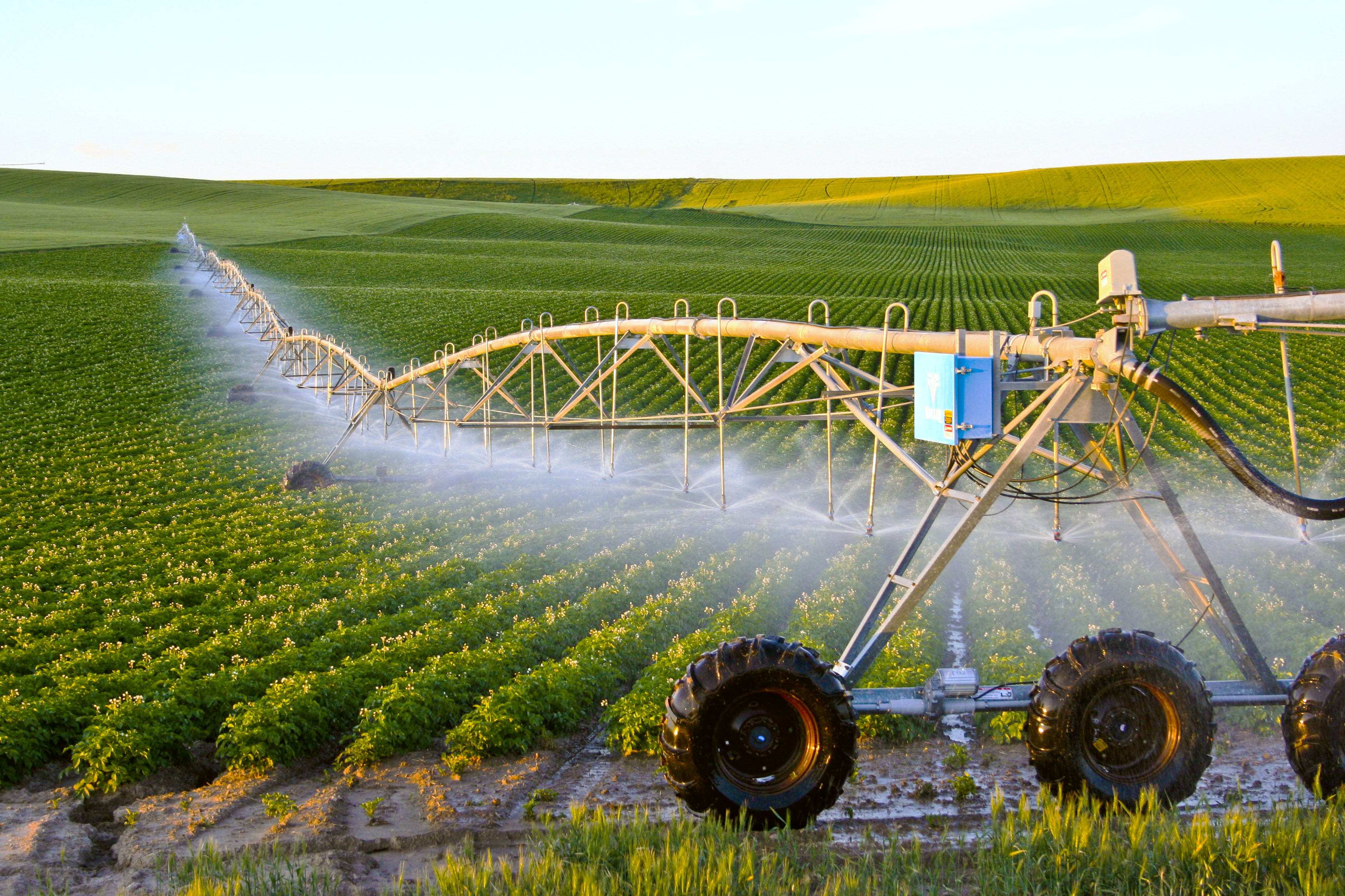 Should Crop Price Matter When Determining Irrigation Acreage ...