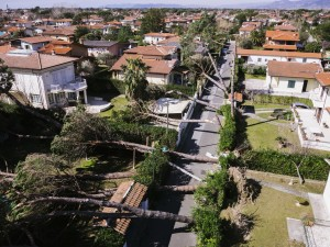 Trees felt over houses  by strong wind, natural disaster theme