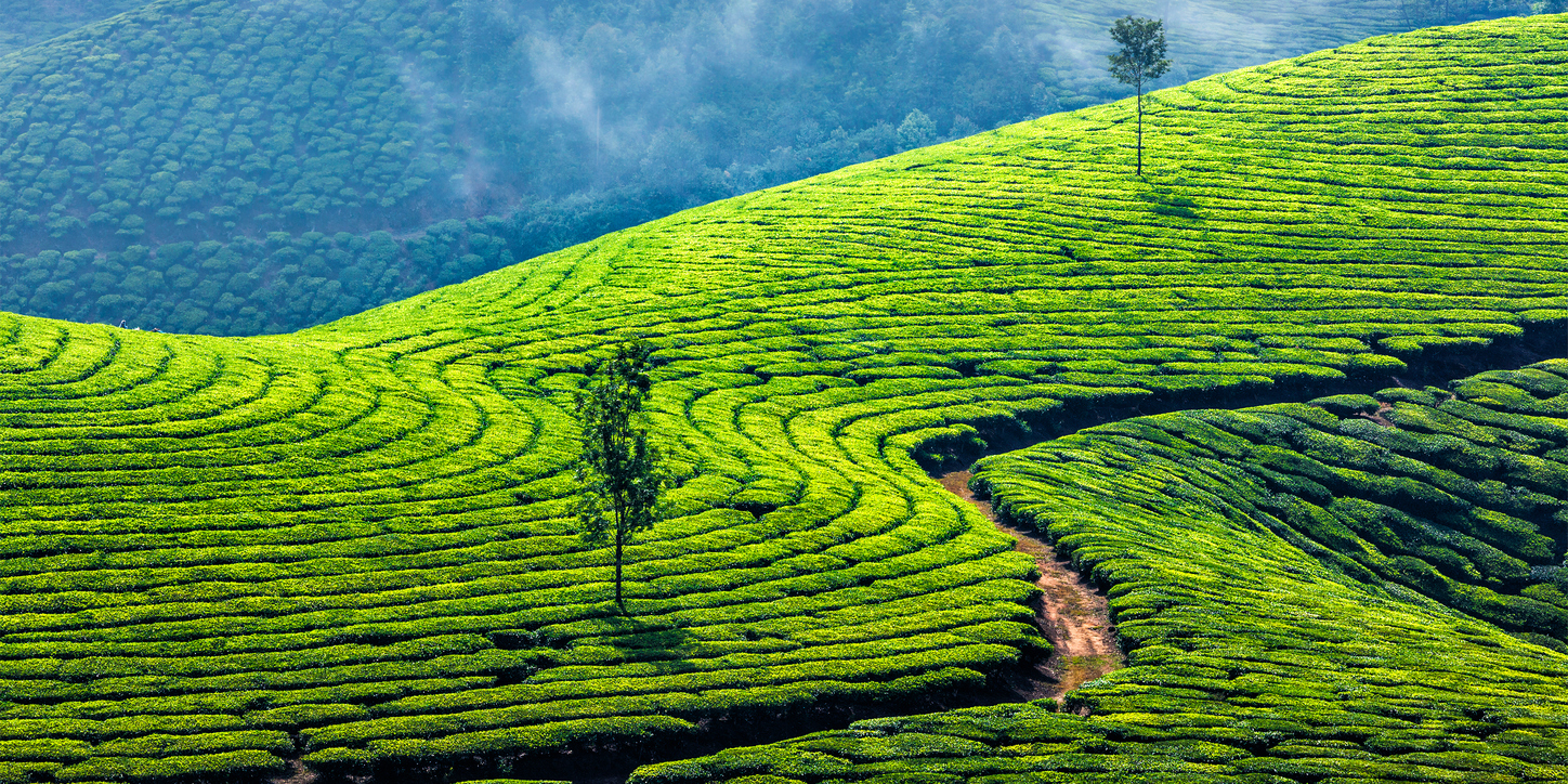 Reading the Tea Leaves: Labor Rights Violations on India's ...